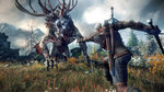 <a href=news_e3_trailer_de_the_witcher_3-14145_fr.html>E3: Trailer de The Witcher 3</a> - Image