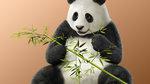 <a href=news_kuma_panda_rejoignent_tekken_7-18651_fr.html>Kuma & Panda rejoignent Tekken 7</a> - Kuma & Panda Renders