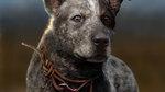 <a href=news_e3_far_cry_5_trailers-19221_en.html>E3: Far Cry 5 trailers</a> - Concept Arts
