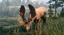 The wildlife in Red Dead Redemption 2 - 6 screenshots